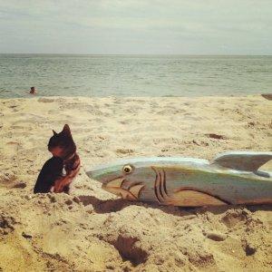 Flat Brenna Goes to the Beach