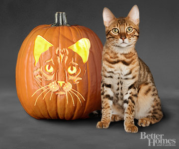 Bengal Carved Pumpkin