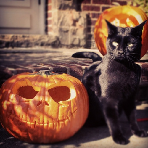 Black Cat and Jack Skellington Pumpkin