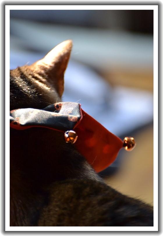 Brenna's Halloween Jester Collar