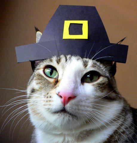 Cat Pilgram