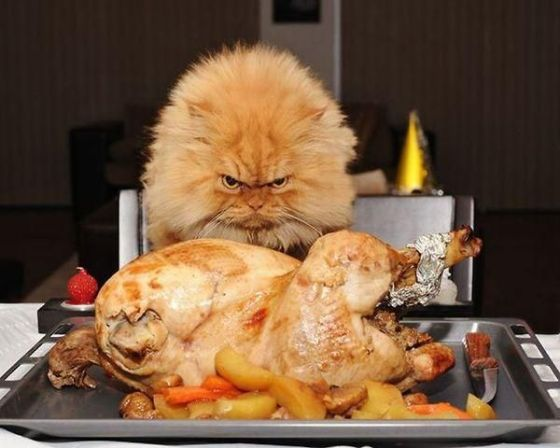 Cat with Roasted Turkey