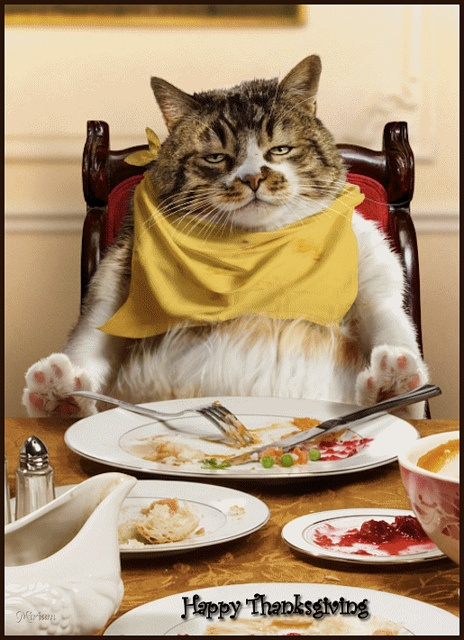 Happy Thanksgiving Cat
