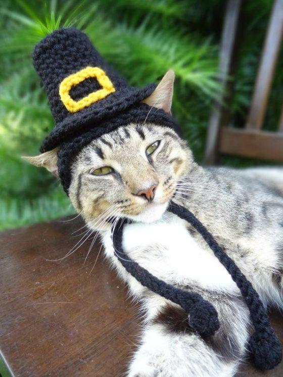 Pilgram Cat Hat