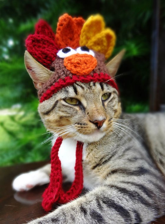 Thanksgiving Turkey Hat for Cats