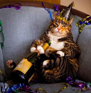 Champagne New Year's Cat