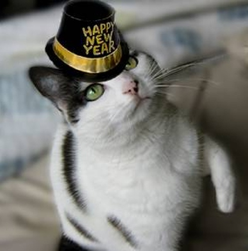 Happy New Year Kitty