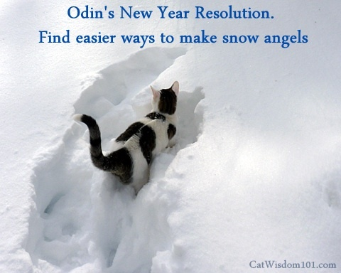 Odin's New Year Resolution