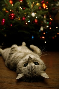 Rub My Belly for Christmas