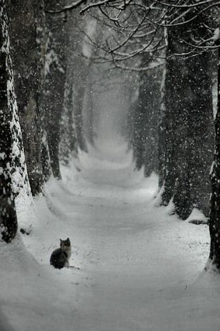 Snowy Cat Wonderland