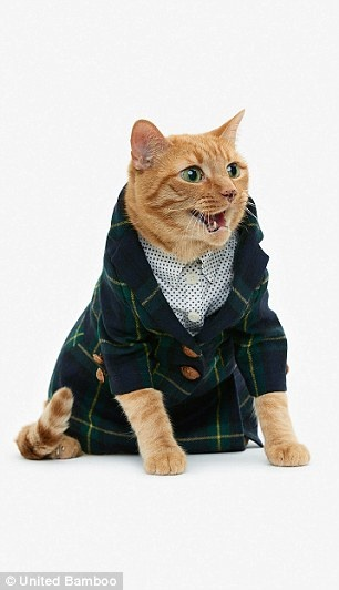 Tortured Kitty in Tartan