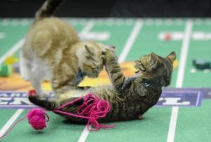 Kitten Bowl Tackle