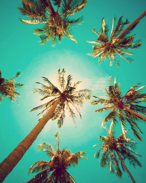 Palm Trees | Faith, Hope, Love, and Luck Survive Despite a Whiskered Accomplice