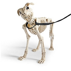 Skeleton Dog on Leash | Faith, Hope, Love, and Luck Survive Despite a Whiskered Accomplice